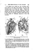 Seite 43